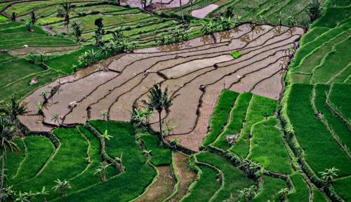 Foto Pemerintah Bidik Desa Jadi Sentra Produksi Pertanian dan Pangan