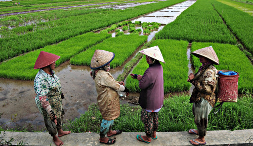 Foto Keren, Indeks Ketahanan Pangan Indonesia Terus Meningkat