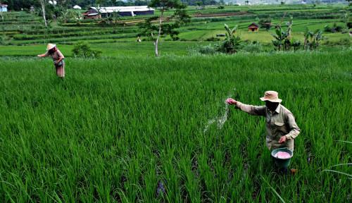 Foto Jaga Kualitas Benih Pangan, Kementan Kaji Sistem Distribusi Efisien