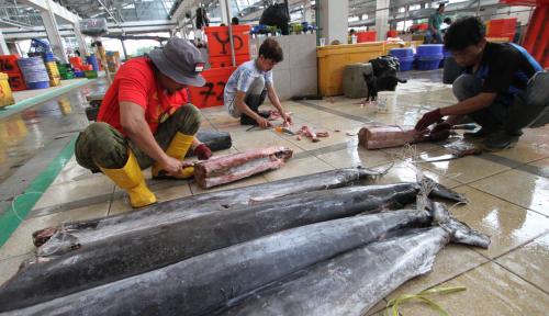 Foto BUMN Perikanan Ini Genjot Ekspor Tuna ke Jepang