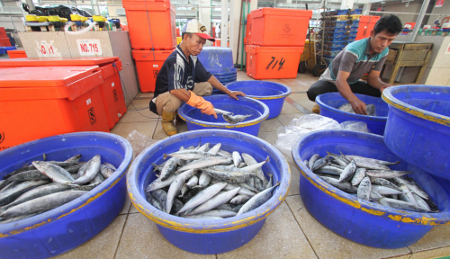 Perum Perindo Pastikan Pasar Ikan Modern Tak Terganggu Virus Corona