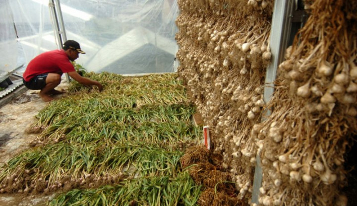 Kasihan Petani! Impor Bawang Putih Tetap Dilakukan? - Warta Ekonomi