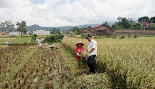 Foto Pemerintah Jaga Harga Gabah Demi Kesejahteraan Petani
