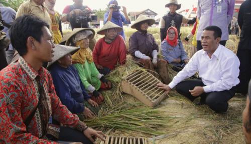 Foto DPR Sampai Kadin Dukung Kementan Imbau Bulog Serap Gabah Petani