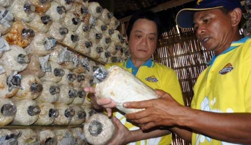 Foto Lewat CSR, Campina Dorong Petani Jamur Tingkatkan Nilai Jual