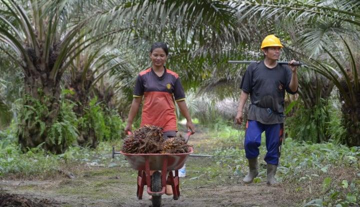 Manuver ke Laos, PTPN III Bakal Pasarkan Hasil Pertanian dan Kembangkan Perkebunan - Warta Ekonomi