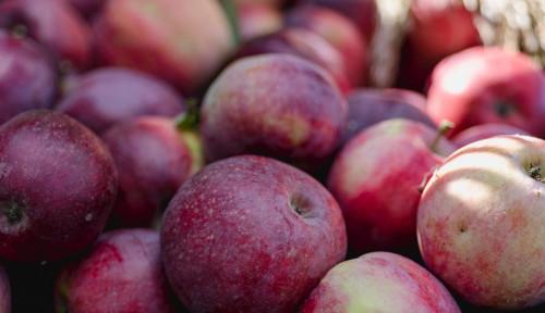 Foto Mari Hidup Sehat! Bebaskan Buah dan Sayur dari Pestisida!