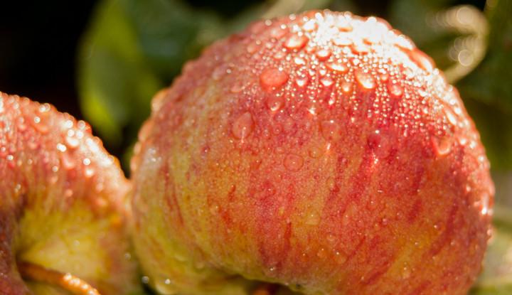 Perhatian, Sebaiknya 5 Makanan Ini Tidak Perlu Dicuci Sebelum Dimasak - Warta Ekonomi