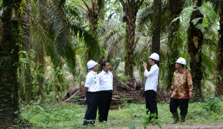Kementan Siap Kolaborasi Satu Data Kelapa Sawit Indonesia - Warta Ekonomi