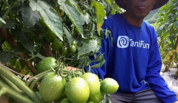 Siasati Penjualan Komoditas Hortikultura, Kementan Gandeng Sejumlah Startup