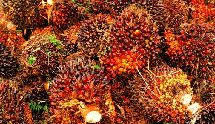 Ekspor Minyak Sawit Capai 2,96 Juta Ton, RI Perkuat Hilirisasi CPO - Warta Ekonomi