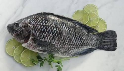 Foto Produsen Ikan Tilapia Ini Ekspor 90% Produknya ke Luar Indonesia