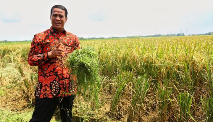 Pengamat Nilai Kebijakan Pertanian Berkontribusi Terhadap Kinerja Ekonomi Makro - Warta Ekonomi
