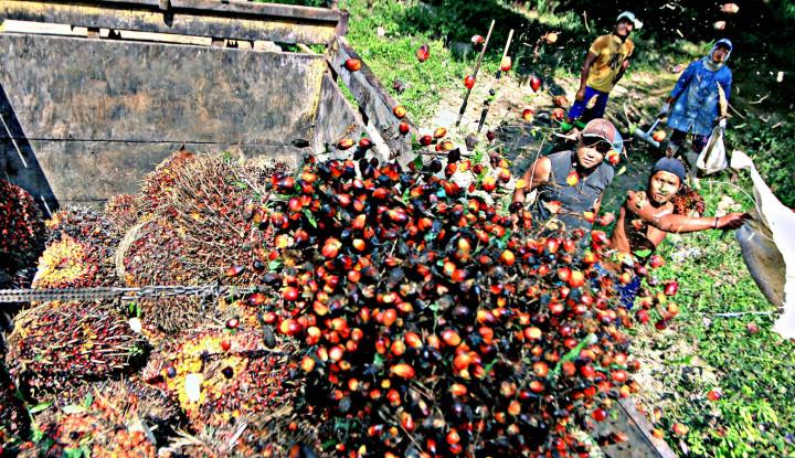 India-Malaysia Semakin Tegang, CPO Indonesia Girang - Warta Ekonomi