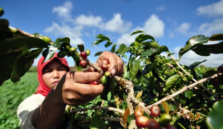 4 dari 10 Produk Ekspor Andalan Indonesia adalah Komoditas Pertanian
