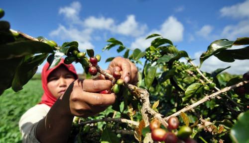 Foto 4 dari 10 Produk Ekspor Andalan Indonesia adalah Komoditas Pertanian