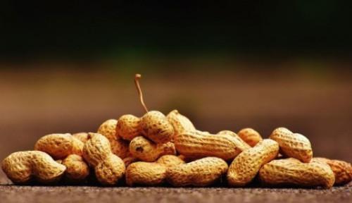 Foto Mau Tahu Sumber Protein Vegetarian untuk Kesehatan Otot?