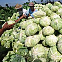 Asik, Kinerja Ekspor Pertanian Selama Pandemi Tetap Ciamik