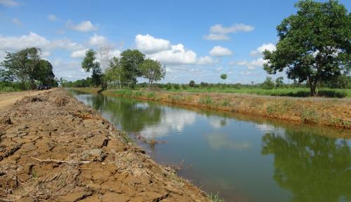 Foto Jika Tata Kelola Air Dibenahi, Rawa Bisa Menunjang Produktivitas Pertanian