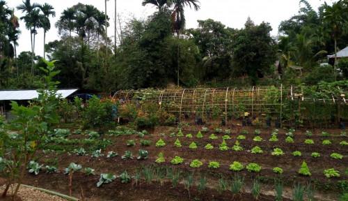 Foto Kembangkan Pertanian Organik, Kementan Gelar Jambore Organik Kampanyekan Pangan Sehat