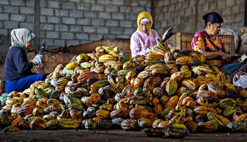 Foto Industri Pengolahan Kakao Setor Devisa hingga US$1,13 M