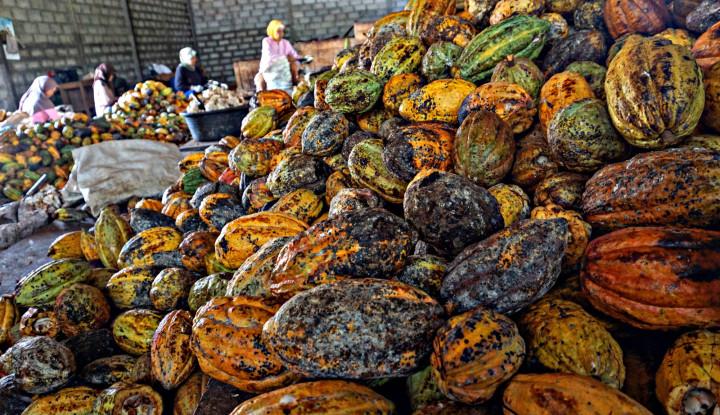 Pemerintah Ajak Petani Garap Hilirisasi Kakao - Warta Ekonomi