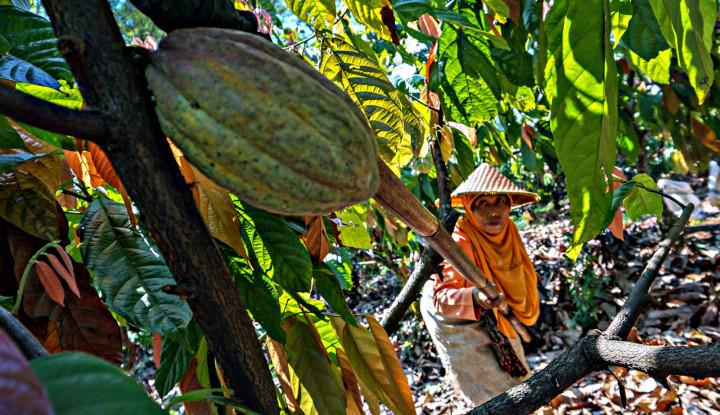 Mondelez Hadirkan Pusat Penelitian Kakao Berskala Global di Indonesia