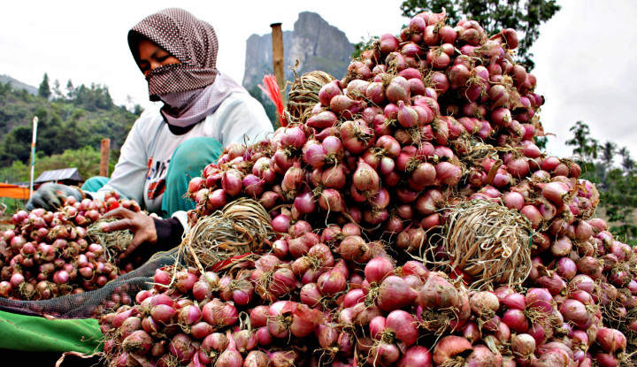Kementan: Stok Bawang Merah Aman Jelang Lebaran