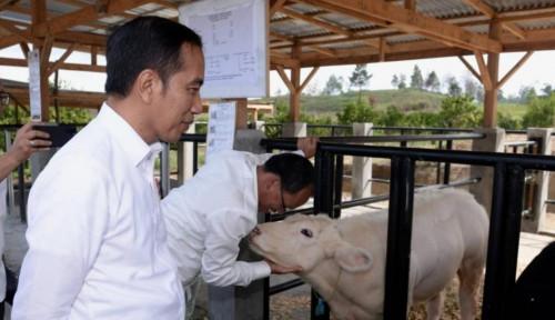 Foto Jokowi Tidak Butuh Menteri Kaleng-Kaleng