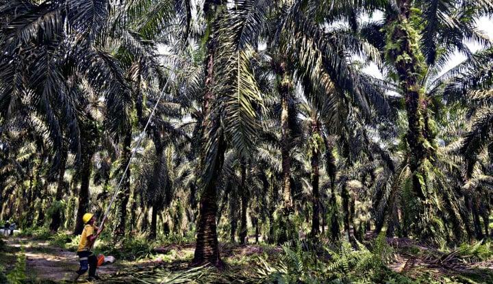 Sawit Ada untuk Konservasi Air dan Tanah, Bukan Pencipta Noda Lingkungan!