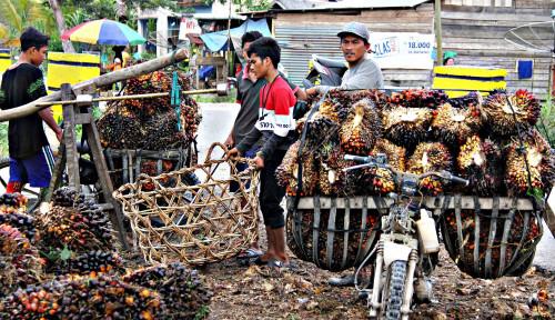 Foto Paspi Yakin Sawit Bisa Jadi Penyokong Ketersediaan Energi di Indonesia
