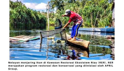 Menjaring Ikan Secara Berkelanjutan di Kawasan Restorasi Ekosistem Riau
