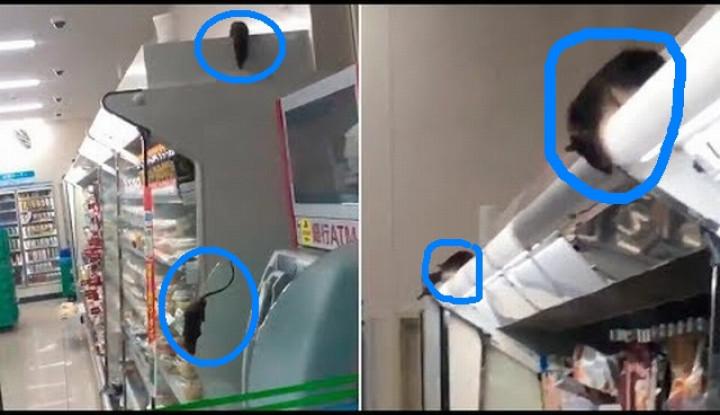 Duh, Tikus Berkeliaran di Minimarket Jepang, Videonya Udah Ditonton 5 Juta Kali - Warta Ekonomi