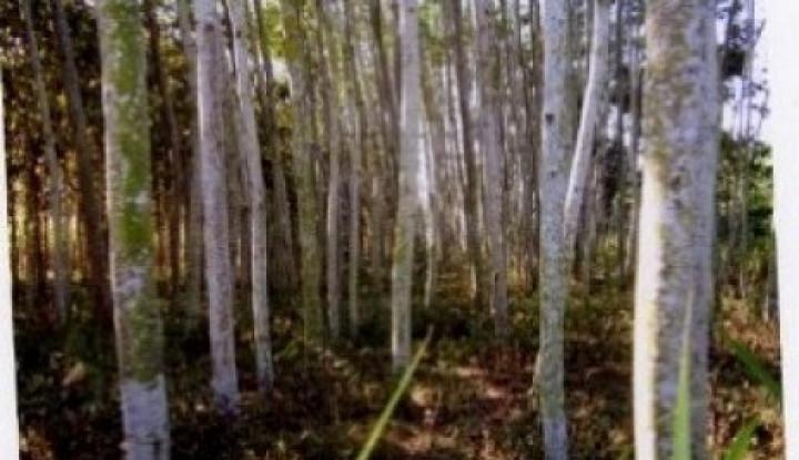 Jangan Salahkan Pohon Sengon - Warta Ekonomi
