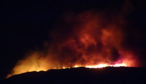 Foto Kebakaran Hutan di Yunani, Ratusan Petugas Dikerahkan