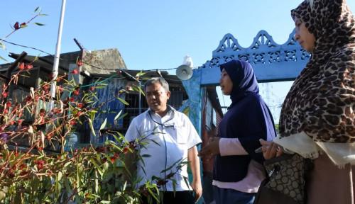 Foto Perkuat Perekonomian Masyarakat, PJB Bentuk Bank Tanaman