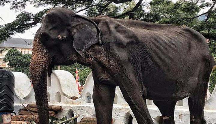 Viral, Gajah Kurus Kering di Sri Lanka yang 'Disiksa' untuk Festival - Warta Ekonomi