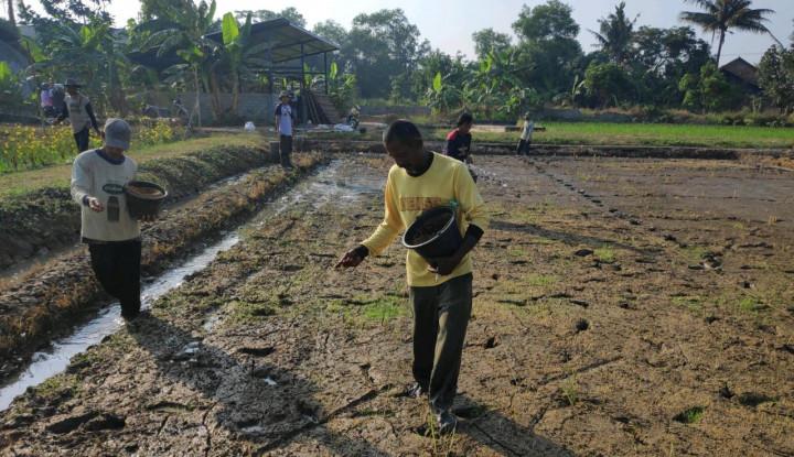 Amankan Produksi, Kementan Kawal Petani Siasati Lima OPT pada Sistem Tabela Hambur - Warta Ekonomi