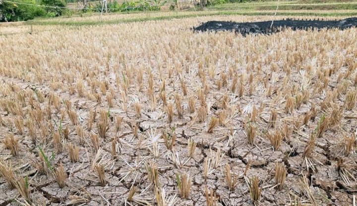 DPR Serukan Pentingnya Antisipasi Ancaman Pemanasan Global - Warta Ekonomi
