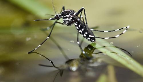 Foto Hindari DBD dengan Kenali Tempat Nyamuk Bersarang