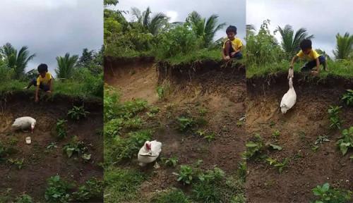 Foto Heboh Bebek Bantu Ambilkan Sandal Seorang Bocah yang Terjatuh