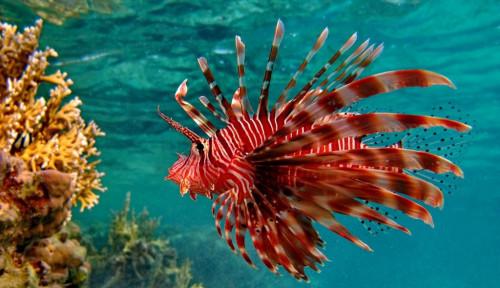 Foto Mengejutkan! Racun Ikan Ini Bisa Bunuh Sel Kanker Serviks