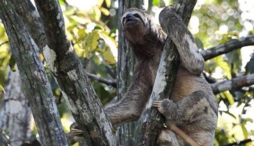 Pakar Lingkungan: Pandemi Global Berikutnya Bisa dari Hutan Amazon