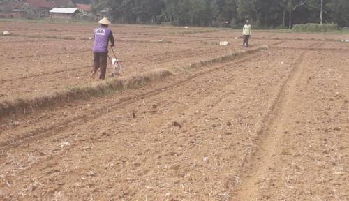 Foto Kemarau, Lampung Tetap Tingkatkan Produksi dan Luas Tambah Tanam