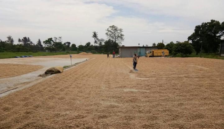 Kementan Dorong Bone Jadi Pionir Produsen Benih Kawasan Timur - Warta Ekonomi