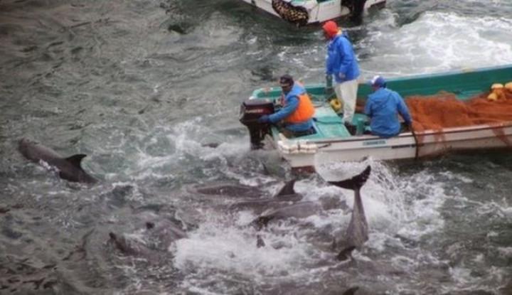Perburuan Lumba-Lumba Tahunan di Jepang Tuai Kecaman - Warta Ekonomi
