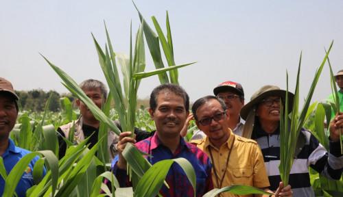 Foto Tahun 2019, Kementan Mulai Inisiasi Pengembangan Kawasan Benih Jagung