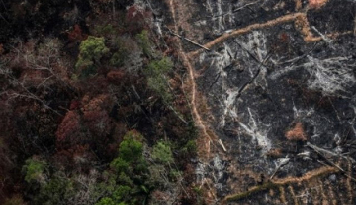 Terbongkar! Ini Alasan Aktivis Paksa Jeff Bezos Beli Hutan Amazon - Warta Ekonomi