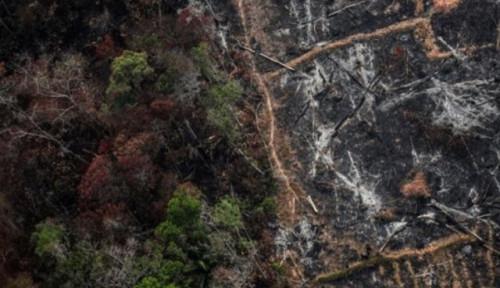 Sebaik-baiknya Menjadi Manusia: Penduduk Asli Amazon Karapiru Meninggal karena Covid