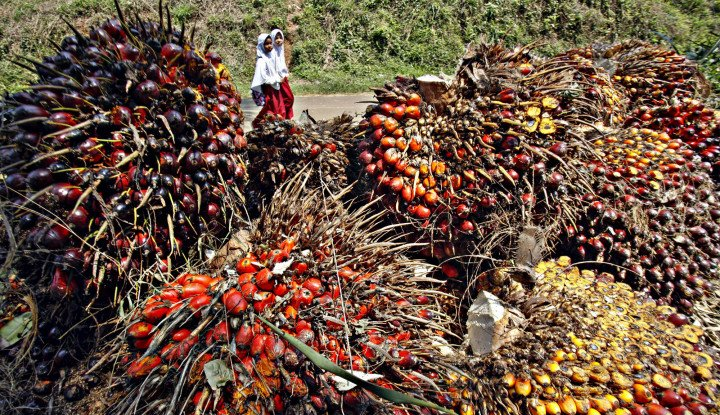 Genjot Ekspor, Kemendag Promosikan Kelapa Sawit Berkelanjutan ke Taiwan - Warta Ekonomi